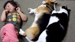 川の字で眠る猫犬子どもらの、最も太きは猫の腹なり