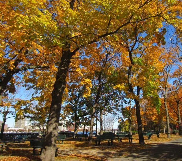 (ボストン、チャールズ川沿いの公園。2013年11月に訪問したとき、紅葉真っ盛りだった)