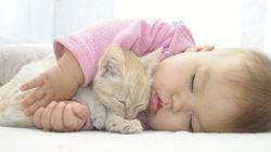 【幸せな気持ちになれる】子供と動物が、一緒にお昼寝したら......(画像集)