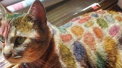カラフルすぎる猫が出現、これってどういうこと?(画像)