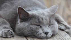 「まとめて長時間眠れない...」と悩む方へ 分割睡眠のススメ