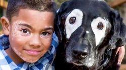 白斑の少年、同じ症状を持つ犬と出会う