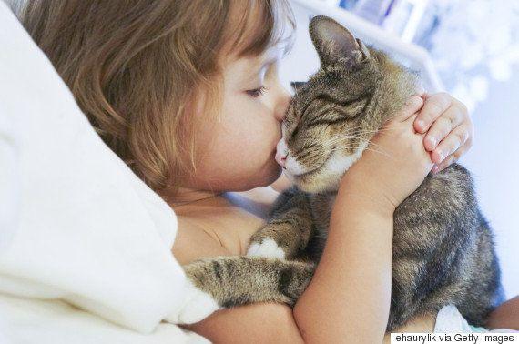 猫まっしぐらな貴方が健康で幸せになる11の理由
