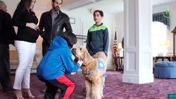葬送セラピー犬の「ルル」は、身近な人の死に向き合う手助けをしてくれる【動画】