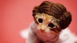 「スター・ウォーズ」と人気ドラマのオリジナルを超えた子猫たち(画像)