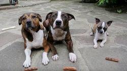 3匹の犬が「待て」に従った結果......(動画)