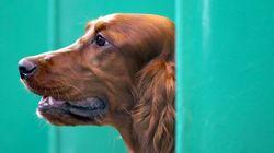364万円の犬小屋、プール付き サムスンが作りました