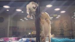 「お隣の子犬に会いたいっ」