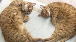 「猫が好きなこと」が応募資格となる会社が台東区に存在