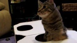 前脚を失った子猫、元気に成長し誰よりやんちゃに遊ぶ