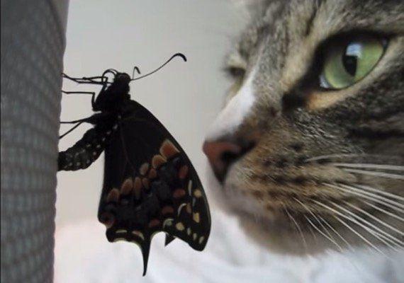 蝶々の羽に鼻を寄す猫、羽化の様子をそっと見守る