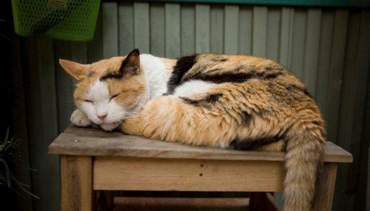東京の猫ちゃんは今日ものーんびり。ひと休み(画像集)