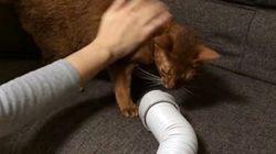 シャンプー後の猫の乾燥には、布団乾燥機を使うと便利
