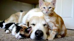 子猫とわんこ、こんな幸せのかたち。(動画)