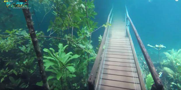 まるで水中都市を散歩しているみたい。水没したハイキングコースを魚たちが泳ぐ(動画)