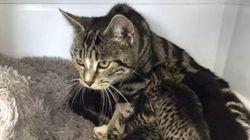 猫のお母さんは、迷子の子猫たちを探し出した。母性本能ニャ。