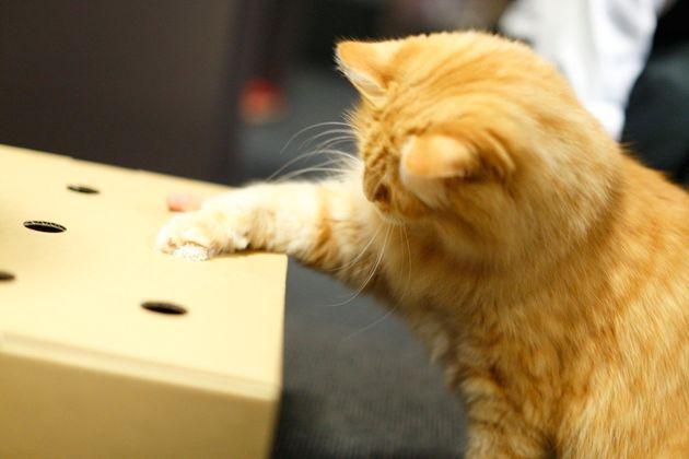 【猫の日】0.2秒で夢中「猫もぐらたたきBOX」