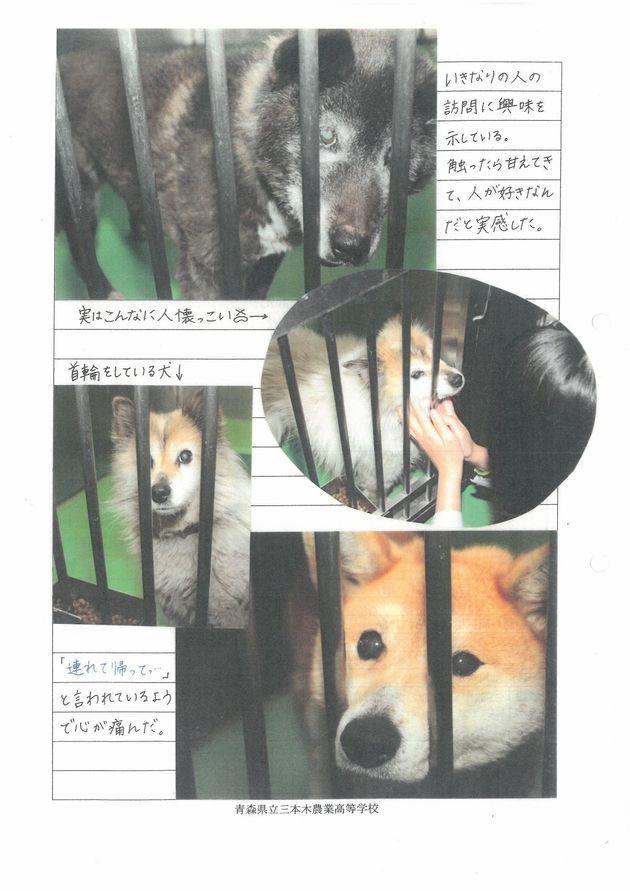 殺処分ゼロを目指す青森の女子高生たち「犬や猫の骨をゴミにするなんて、おかしい!」