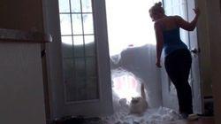 ご飯コールに飛んできた猫、雪の壁に大穴を空ける(動画)