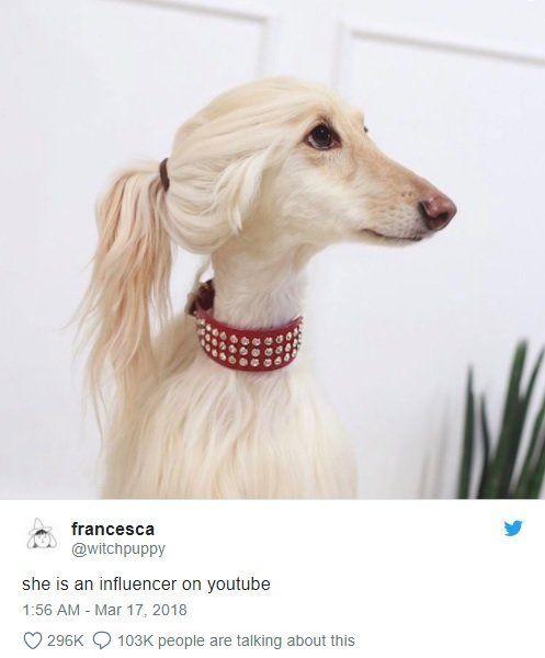 犬の横顔が◯◯にそっくりだとTwitterで話題に