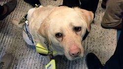 盲導犬の目から見えた、人々の無関心。「もっと思いやりがほしい」