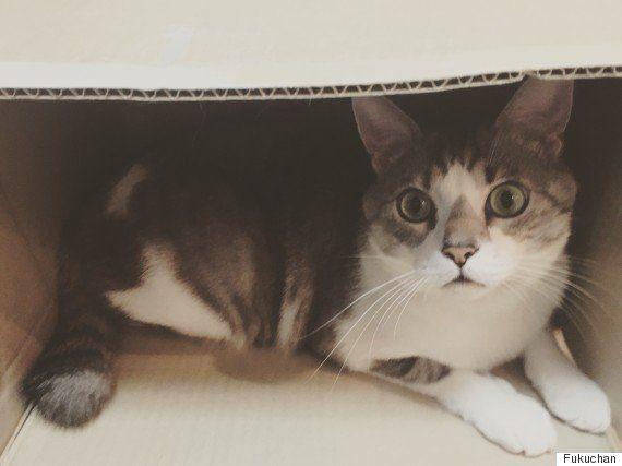 猫は、どうしてこんなに箱を愛するの?