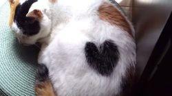 ハートの柄を持つ三毛猫、寝息に合わせてハートが膨らむ