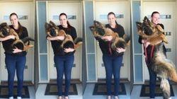 モフモフ犬、8カ月で飼い主より大きくなっちゃったよ。(証拠写真)