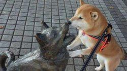 柴犬が、石になった味方にかけた言葉