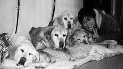 盲導犬の幸せな最期とは 世界初の「老犬ホーム」で250頭を看取った辻惠子さんに聞きました
