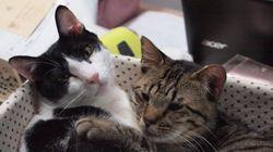猫エイズを知っていますか?