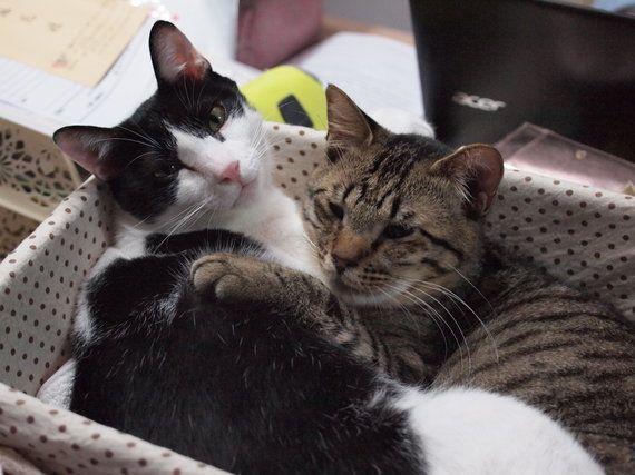 あなたは猫エイズを知っていますか? (河瀬麻花 ネコリパブリック首相)