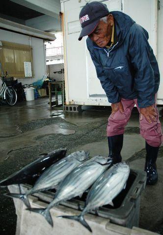 消えたカツオを追え カツオ王国・高知で見えたじり貧の漁業大国