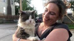 「ニャンてことだー」高速道路を走る車の屋根にネコ。必死につかまる(動画)