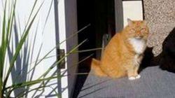 猫ちゃんの影なの? 黒猫なの?