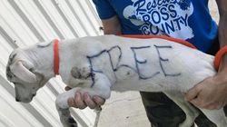 身体に「FREE」と書かれ捨てられたワンコ、新しいお家が見つかる