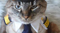 たま駅長だけじゃない 猫は世界中でこんなに働いている