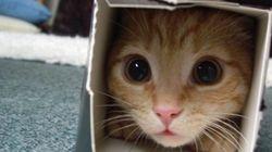 猫を飼っていると直面する、31の現実(画像集)