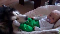 赤ちゃんと大きなわんこは、こうやって仲良くなるんだね(動画)