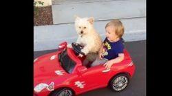 赤ちゃんとドライブする犬がイケメンすぎる(動画)