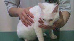 猫に目薬をさすときの3つのポイント