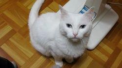 この猫ちゃん、足を踏まれたら、そっと踏み返す(動画)