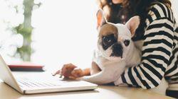「何それうらやましい!」ワンコと出勤する#Take Your Dog to Work
