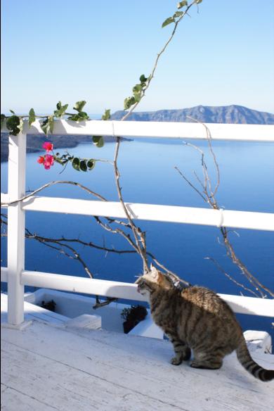 サントリーニ島をお得にのんびり楽しむなら、冬旅行がオススメ(かも?)