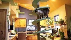 15匹の保護猫、屋内を泳ぐ鯉、働き者のルンバが同居する