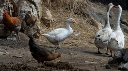 中国における鳥インフルエンザの流行状況、2013〜2014年はどうなっていたか