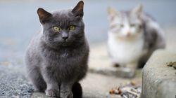 野良猫に火...飼い猫かどうかで処罰が変わる?