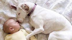 ずっといっしょ。わんこと赤ちゃんと一緒のお昼寝タイム