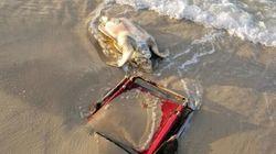 ビーチ・チェアと死んだウミガメ 覚えておきたい1枚の写真