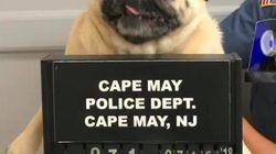 可愛すぎる「容疑者」を逮捕。警察が発表した顔写真に全米がホッコリ